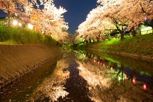 夜桜 川面に映る ライトアップ 桜の写真素材 [FYI03120467]