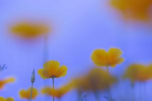 花の写真 資材写真の写真素材 [FYI03120478]
