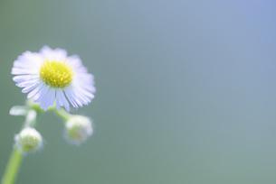 花の写真 資材写真の写真素材 [FYI03120480]