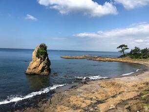日本の海と松の木の写真素材 [FYI03120544]