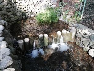 真姿の池湧水の写真素材 [FYI03120660]
