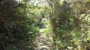 大島の緑道の写真素材 [FYI03120714]