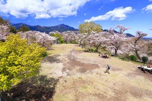 弘法山の桜の写真素材 [FYI03120876]