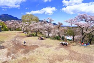 弘法山の桜の写真素材 [FYI03120877]