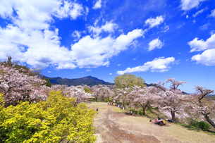 弘法山の桜の写真素材 [FYI03120879]