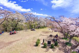 弘法山の桜の写真素材 [FYI03120880]