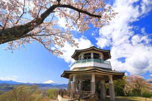 弘法山の桜と富士山の写真素材 [FYI03120882]