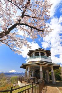弘法山の桜と富士山の写真素材 [FYI03120883]