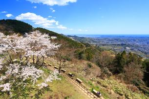 菜の花台の桜の写真素材 [FYI03120886]