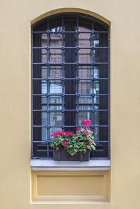 アイアン面格子とゼラニュームのフラワーポットのあるアーチ窓の写真素材 [FYI03121149]