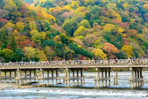 紅葉の京都 嵐山と渡月橋の写真素材 [FYI03121869]