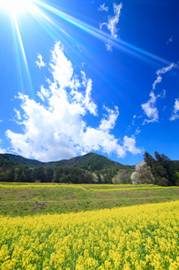 菜の花の段々畑と桜と住吉神社奥社などの里山と太陽の光芒の写真素材 [FYI03121982]