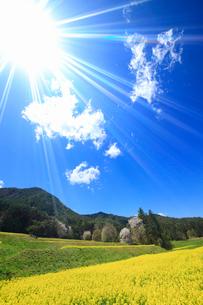 菜の花の段々畑と桜と住吉神社奥社などの里山と太陽の光芒の写真素材 [FYI03121990]