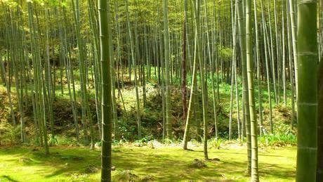 竹林の写真素材 [FYI03122086]