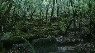 屋久島の森の写真素材 [FYI03122315]