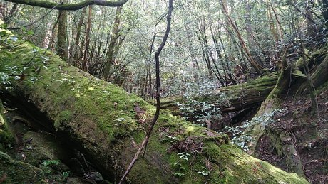 屋久島の森の写真素材 [FYI03122391]