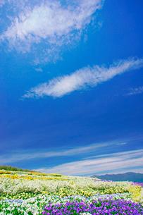 信州花フェスタの花畑とすじ雲と蝶ヶ岳など北アルプス遠望の写真素材 [FYI03122783]