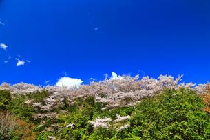 桜山の写真素材 [FYI03122899]