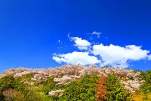 桜山の写真素材 [FYI03122904]