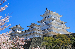 姫路城の連立天守群と桜の写真素材 [FYI03122986]