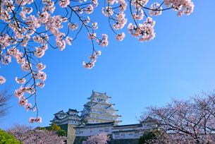 姫路城の連立天守群と桜の写真素材 [FYI03122987]