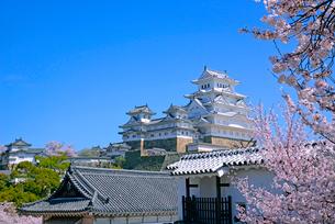 姫路城の連立天守群と桜の写真素材 [FYI03122995]