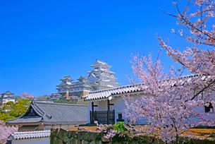 姫路城の連立天守群と桜の写真素材 [FYI03122998]