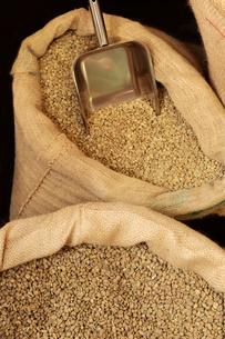 生のコーヒー豆の写真素材 [FYI03123261]