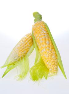 皮をむいたトウモロコシの写真素材 [FYI03123266]