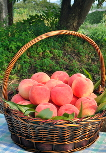 桃の籠盛りの写真素材 [FYI03123276]