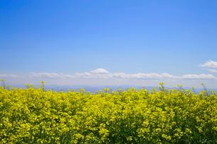菜の花畑から見た山々の写真素材 [FYI03123291]