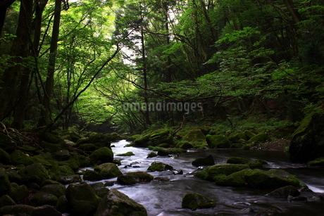 那須高原 乙女の滝の写真素材 [FYI03123465]