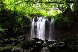 那須高原 乙女の滝の写真素材 [FYI03123468]