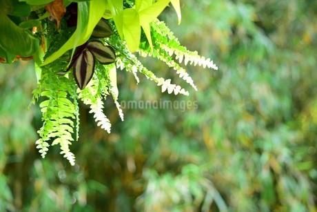 森の風景の写真素材 [FYI03123586]