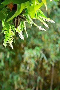 森の風景の写真素材 [FYI03123587]