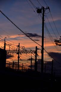 夕方の電線の写真素材 [FYI03123596]