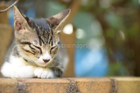 寝る猫の写真素材 [FYI03123607]