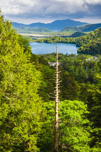 立ち枯れの木と湯ノ湖 奥日光 日光国立公園 ラムサール条約登録湿地の写真素材 [FYI03123816]