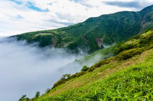 雲海の霧降高原の夏 キスゲ平園地上部の写真素材 [FYI03123856]