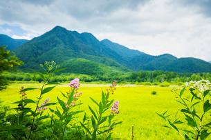 ホザキシモツケ咲く小田代ヶ原と外山の写真素材 [FYI03123862]
