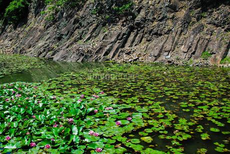 栗林公園、石壁(赤壁)の睡蓮 の写真素材 [FYI03124117]