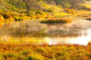 秋の霧ヶ峰高原八島ヶ原湿原草紅葉と八島ヶ池の蒸気霧の写真素材 [FYI03124233]