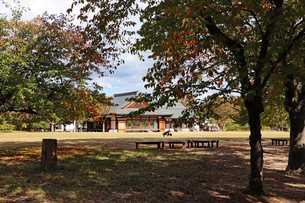 秋の公園の写真素材 [FYI03124278]