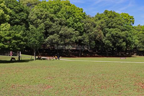 奈良公園の芝生の写真素材 [FYI03124329]