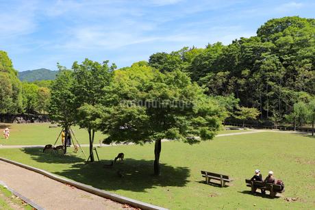 奈良公園の芝生広場の写真素材 [FYI03124330]