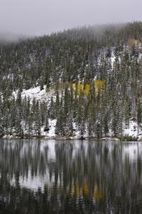 黄葉したアスペンが見える針葉樹林と山岳湖の写真素材 [FYI03124337]