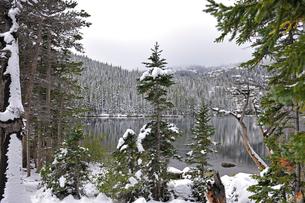 雪の被った樹木の向こうに見える山岳湖と背景の山を覆う霧の写真素材 [FYI03124339]