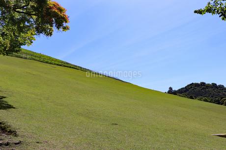 若草山の緑斜面の写真素材 [FYI03124479]