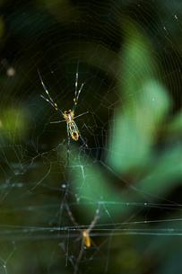 クモの写真素材 [FYI03124508]