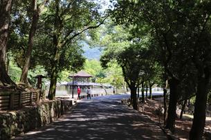 奈良公園の木立の写真素材 [FYI03124729]